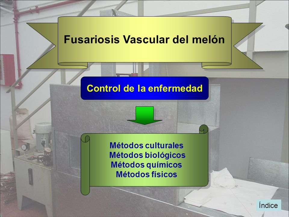 Fusariosis Vascular del melón Control de la enfermedad