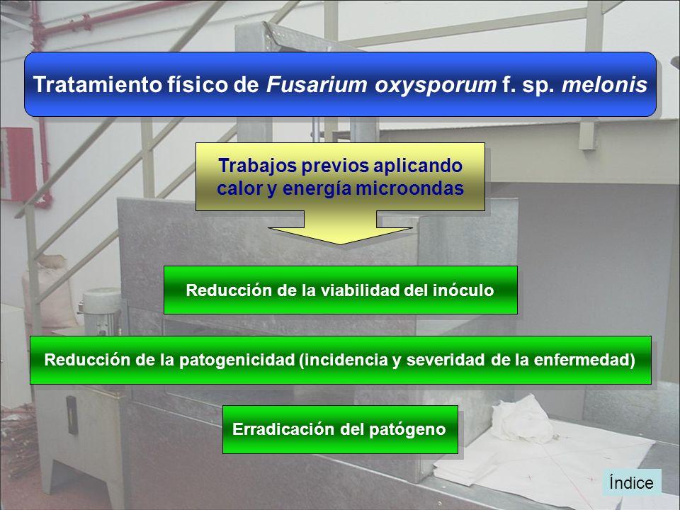 Tratamiento físico de Fusarium oxysporum f. sp. melonis