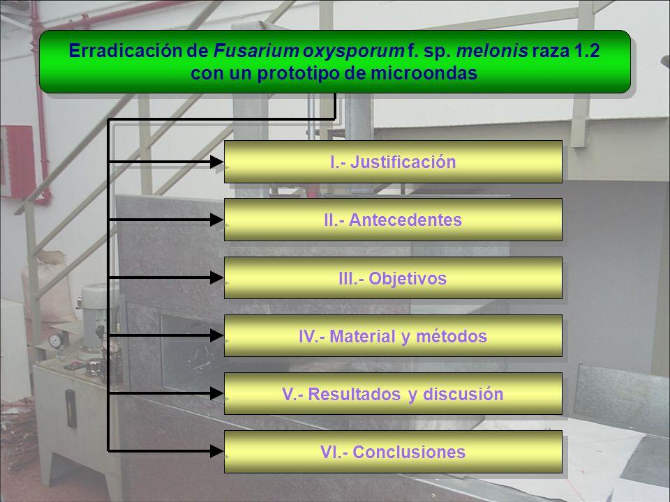 Erradicación de Fusarium oxysporum f. sp. melonis raza 1.2