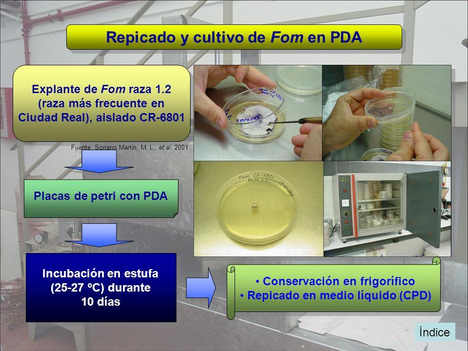 Repicado y cultivo de Fom en PDA
