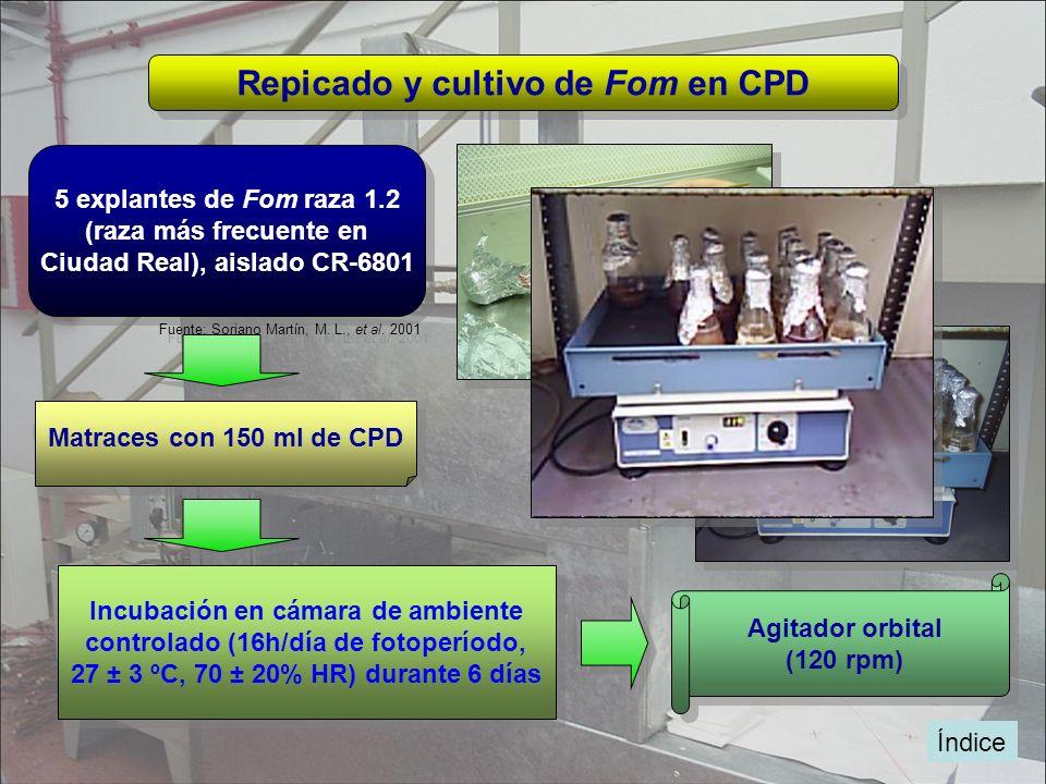 Repicado y cultivo de Fom en CPD