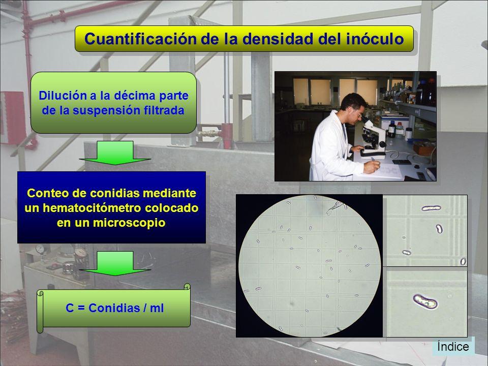 Cuantificación de la densidad del inóculo