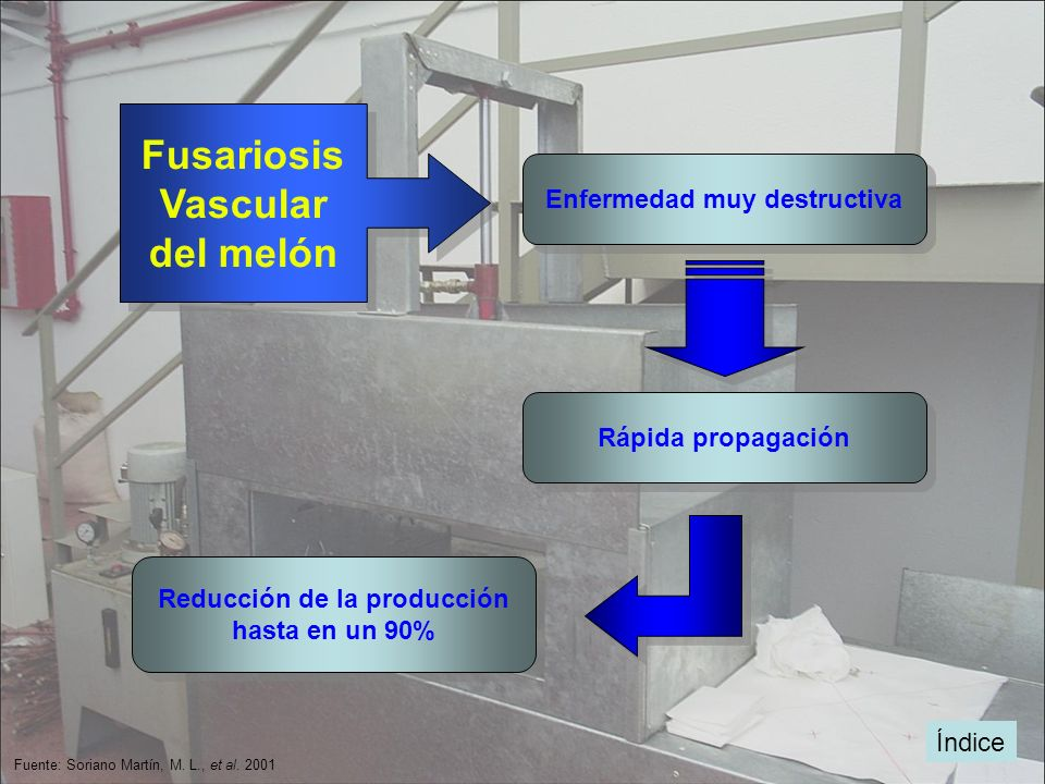 Enfermedad muy destructiva Reducción de la producción
