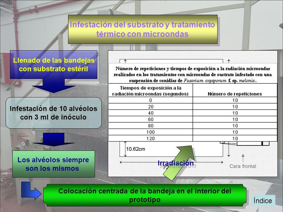 Infestación del substrato y tratamiento térmico con microondas