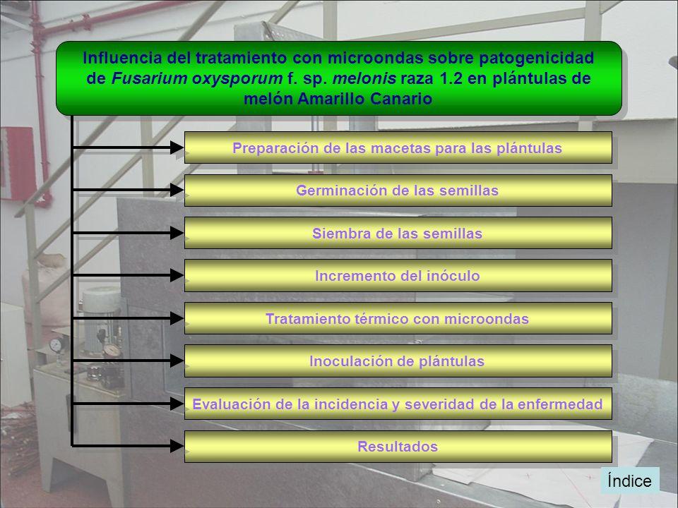 Influencia del tratamiento con microondas sobre patogenicidad