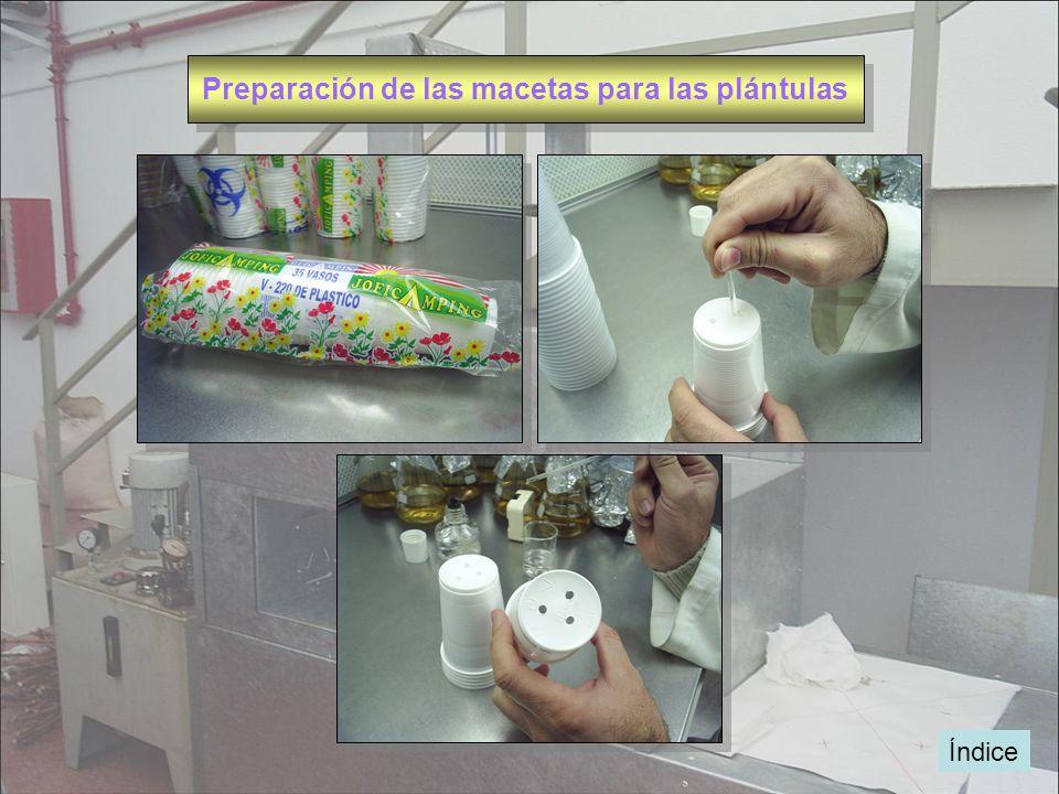 Preparación de las macetas para las plántulas