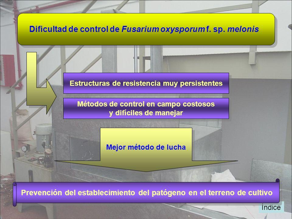 Dificultad de control de Fusarium oxysporum f. sp. melonis