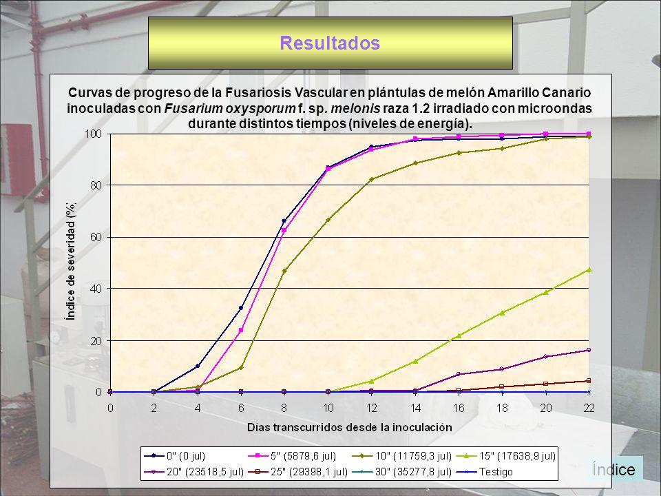 Resultados Curvas de progreso de la Fusariosis Vascular en plántulas de melón Amarillo Canario.