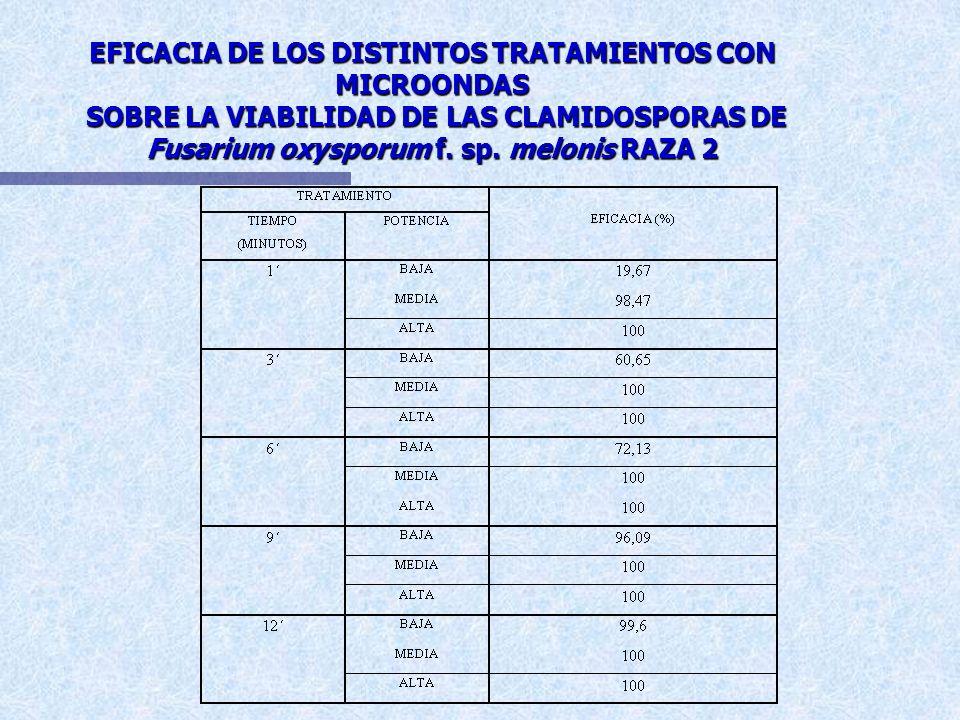 EFICACIA DE LOS DISTINTOS TRATAMIENTOS CON MICROONDAS SOBRE LA VIABILIDAD DE LAS CLAMIDOSPORAS DE Fusarium oxysporum f.