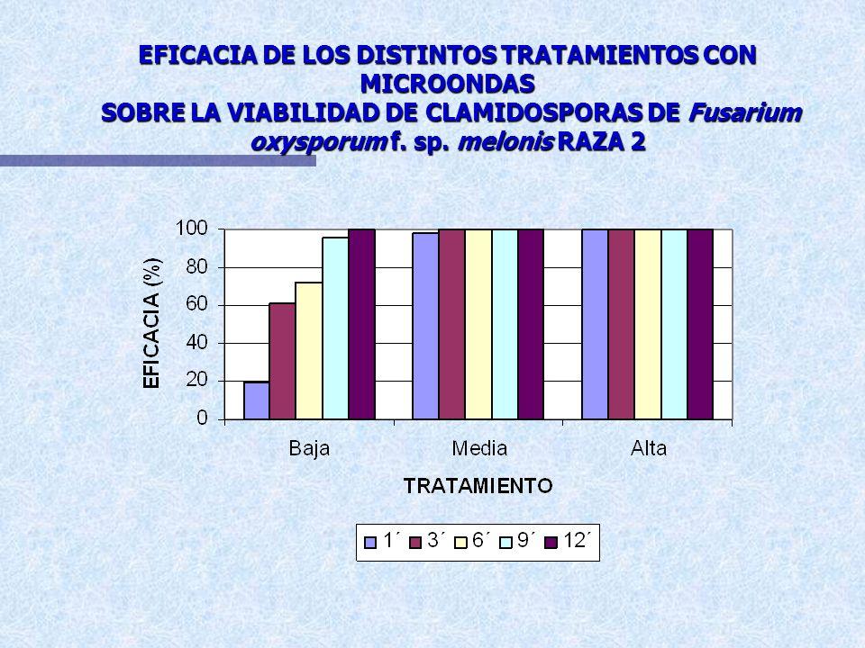 EFICACIA DE LOS DISTINTOS TRATAMIENTOS CON MICROONDAS SOBRE LA VIABILIDAD DE CLAMIDOSPORAS DE Fusarium oxysporum f.