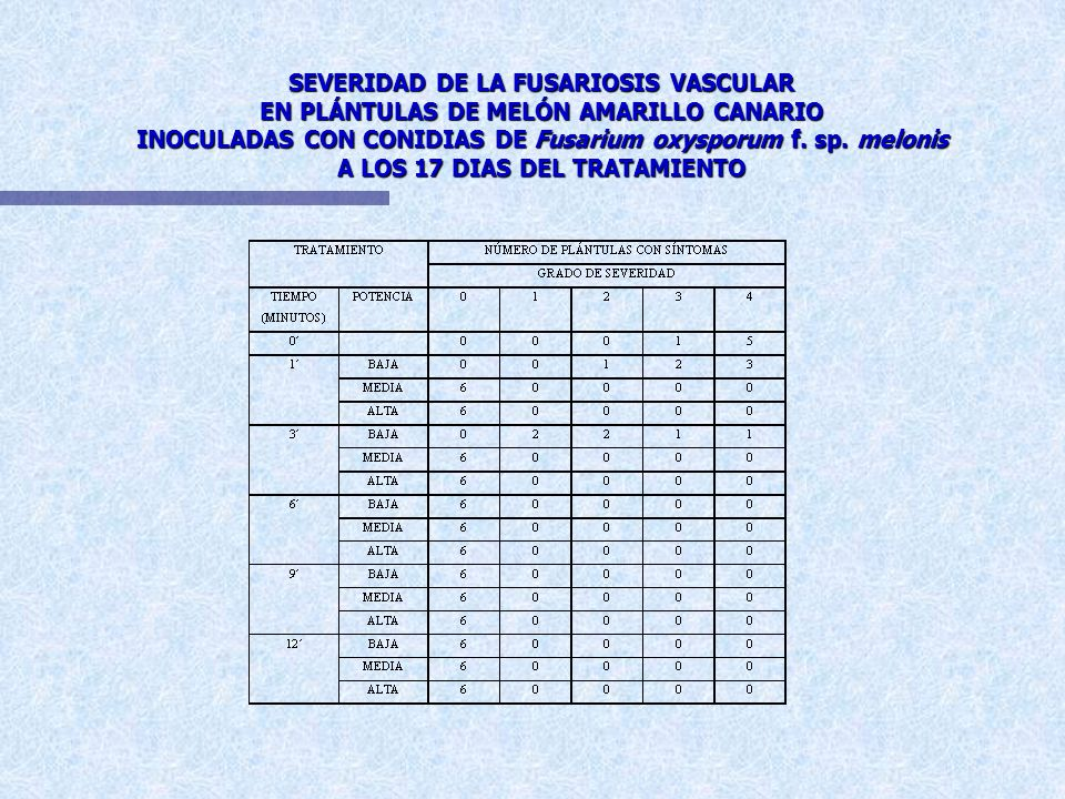 SEVERIDAD DE LA FUSARIOSIS VASCULAR EN PLÁNTULAS DE MELÓN AMARILLO CANARIO INOCULADAS CON CONIDIAS DE Fusarium oxysporum f.