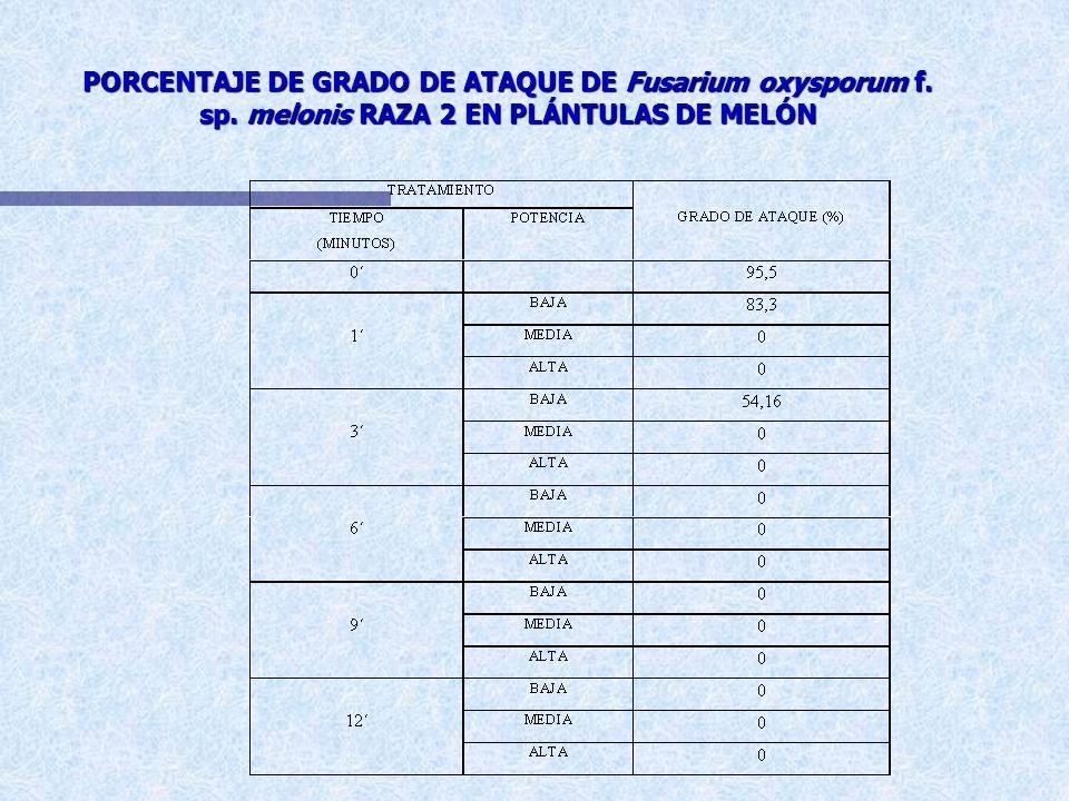 PORCENTAJE DE GRADO DE ATAQUE DE Fusarium oxysporum f. sp