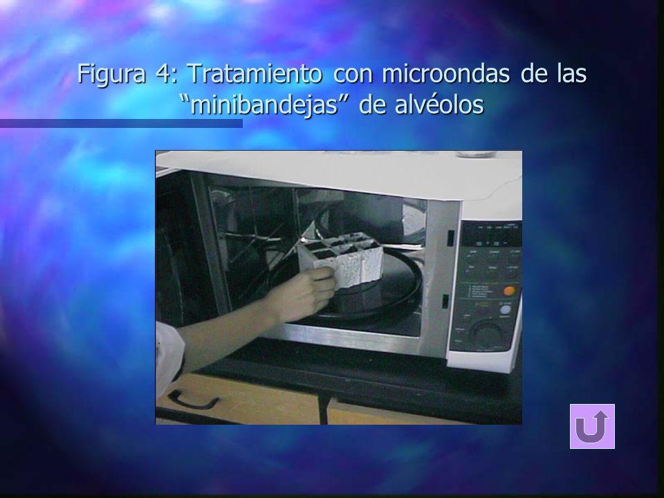 Figura 4: Tratamiento con microondas de las minibandejas de alvéolos