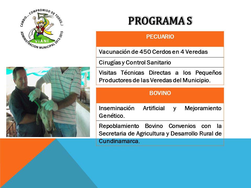 PROGRAMA S PECUARIO Vacunación de 450 Cerdos en 4 Veredas