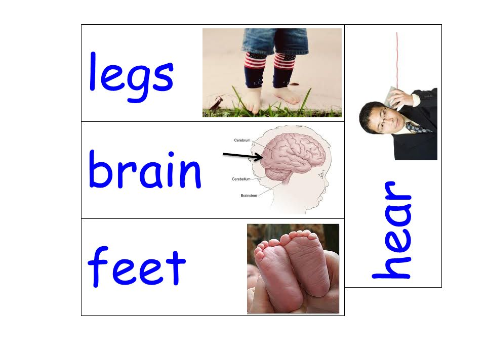 legs hear brain feet