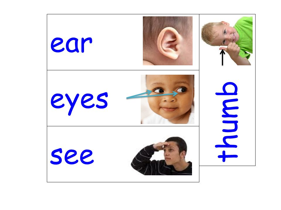 ear thumb eyes see