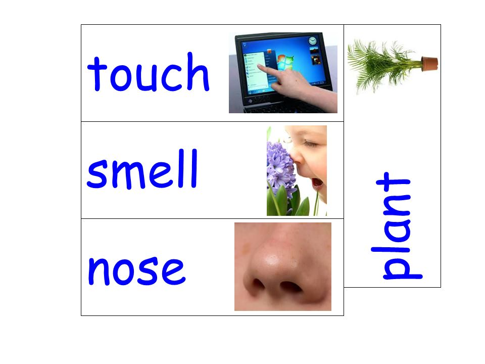touch plant smell nose