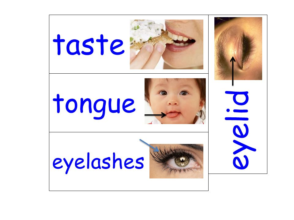 taste eyelid tongue eyelashes