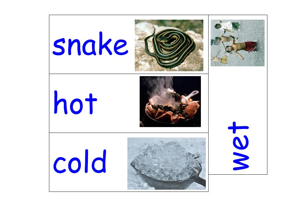 snake wet hot cold