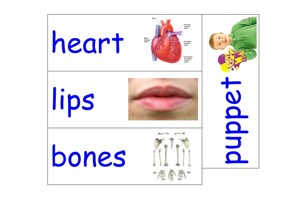 heart puppet lips bones