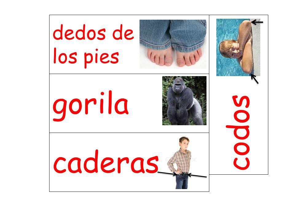 dedos de los pies codos gorila caderas