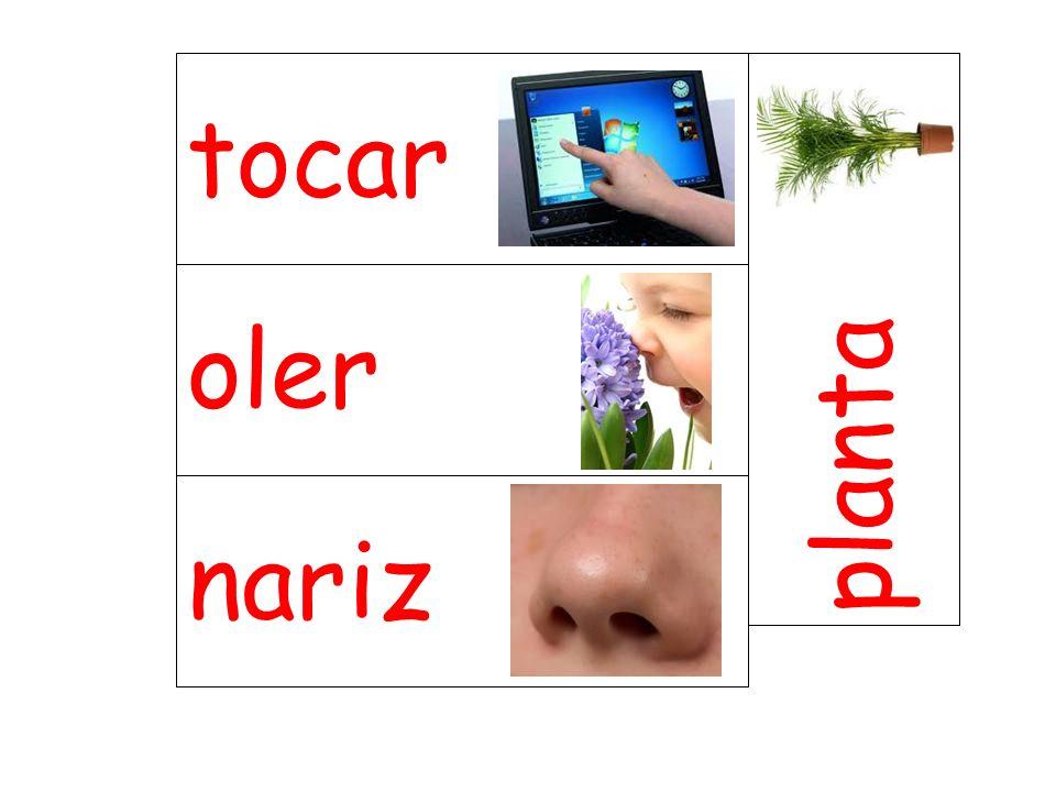 tocar planta oler nariz