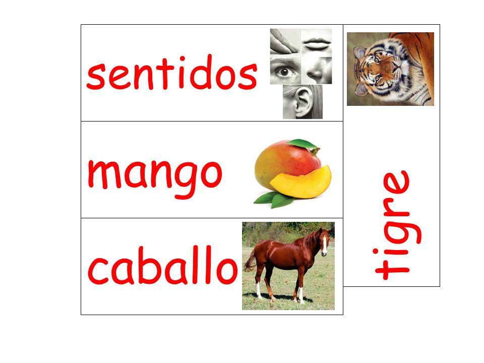 sentidos tigre mango caballo