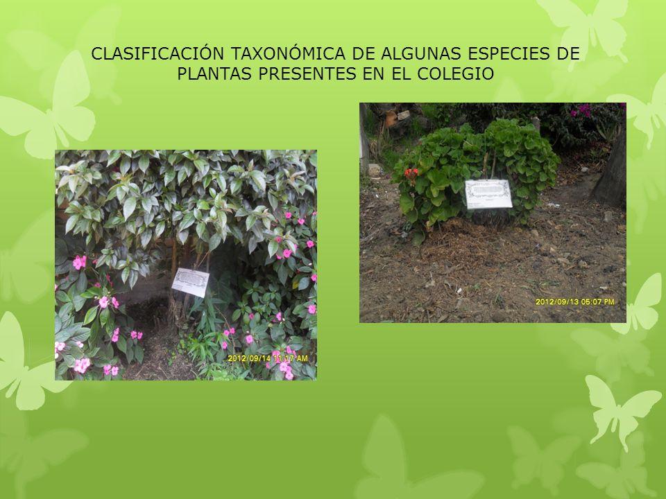 CLASIFICACIÓN TAXONÓMICA DE ALGUNAS ESPECIES DE PLANTAS PRESENTES EN EL COLEGIO