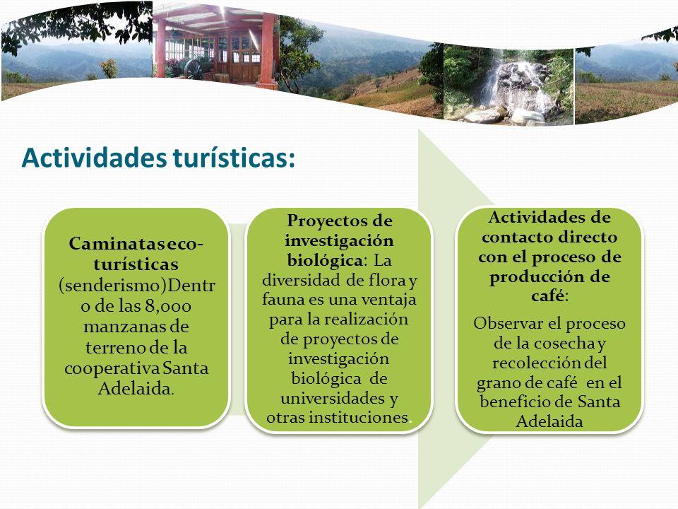 Actividades turísticas: