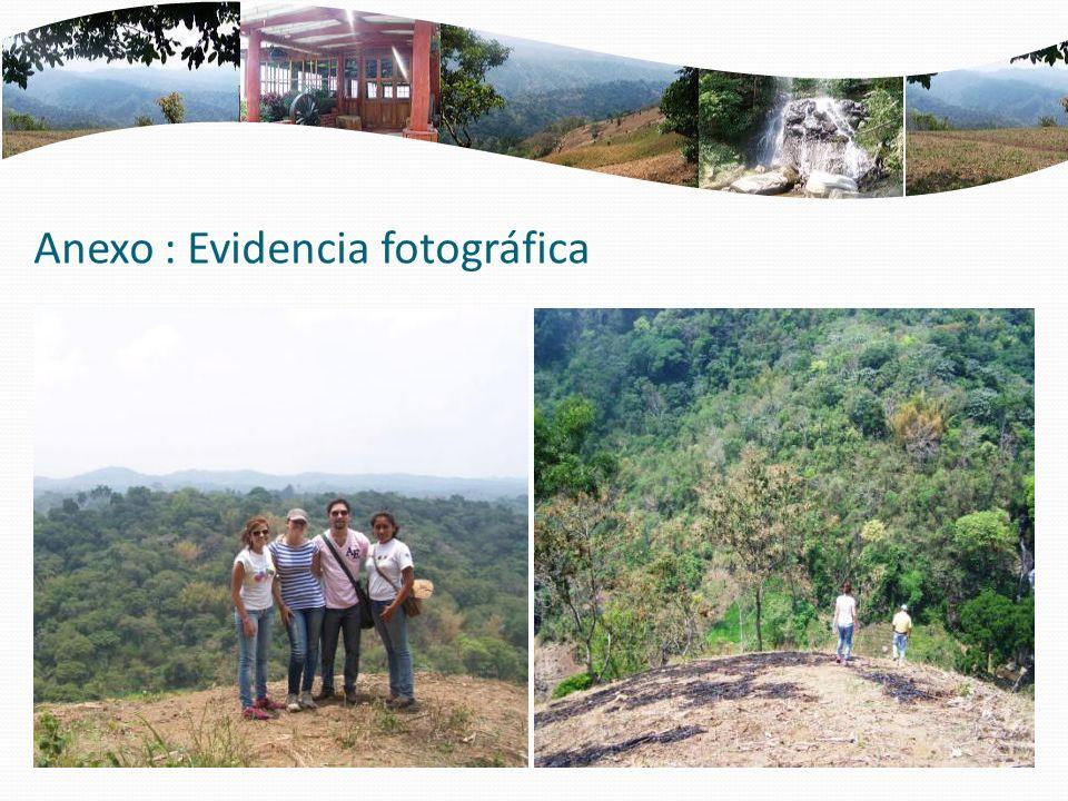 Anexo : Evidencia fotográfica