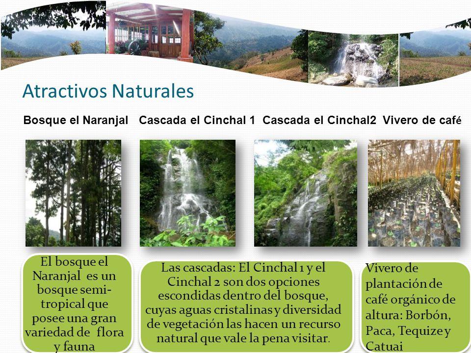 Atractivos Naturales Bosque el Naranjal Cascada el Cinchal 1 Cascada el Cinchal2 Vivero de café.