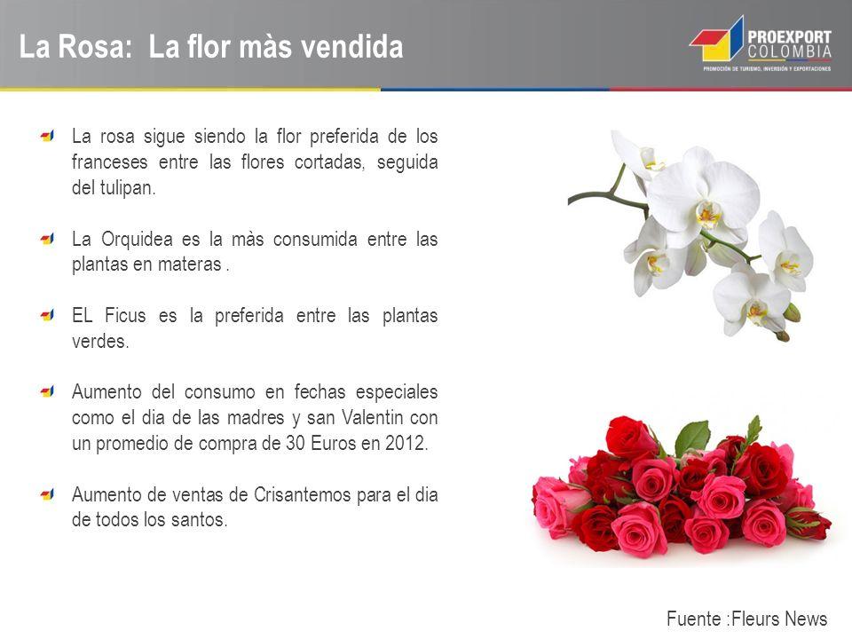 La Rosa: La flor màs vendida