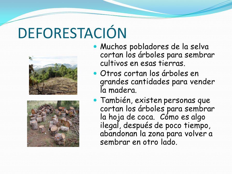 DEFORESTACIÓNMuchos pobladores de la selva cortan los árboles para sembrar cultivos en esas tierras.