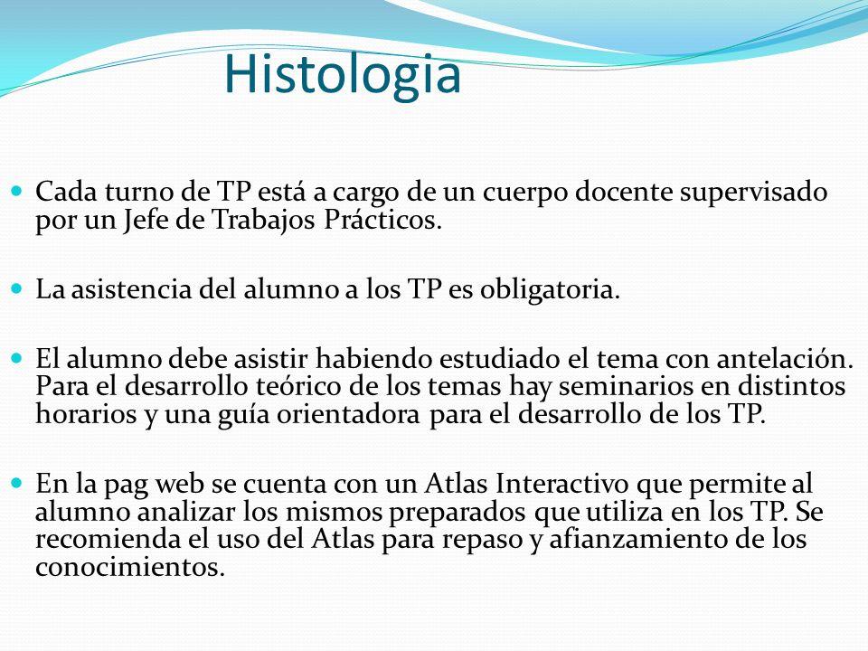 Histologia Cada turno de TP está a cargo de un cuerpo docente supervisado por un Jefe de Trabajos Prácticos.