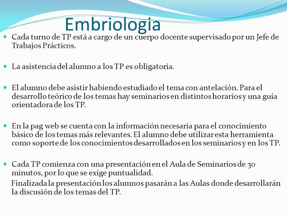 Embriologia Cada turno de TP está a cargo de un cuerpo docente supervisado por un Jefe de Trabajos Prácticos.