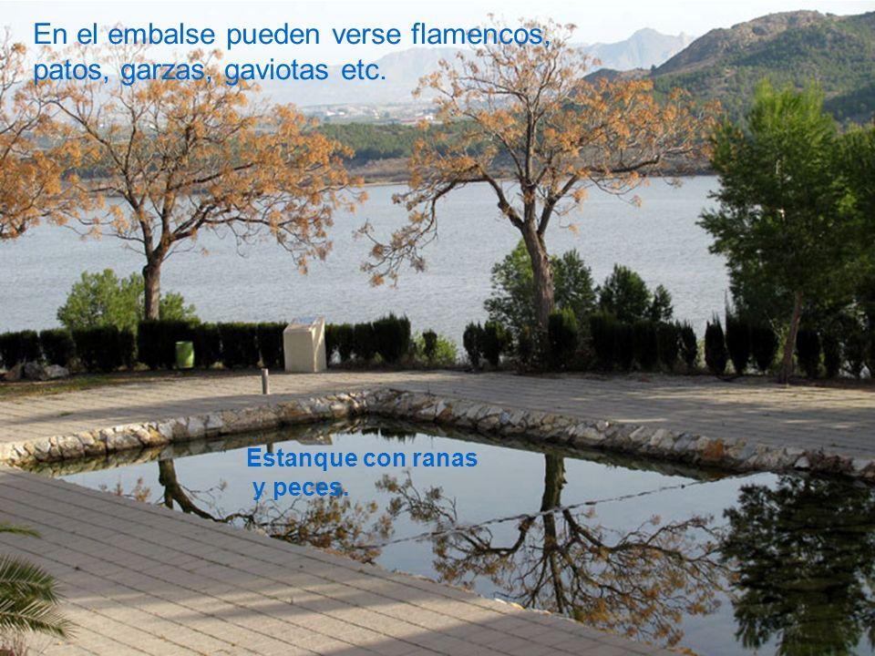 En el embalse pueden verse flamencos, patos, garzas, gaviotas etc.