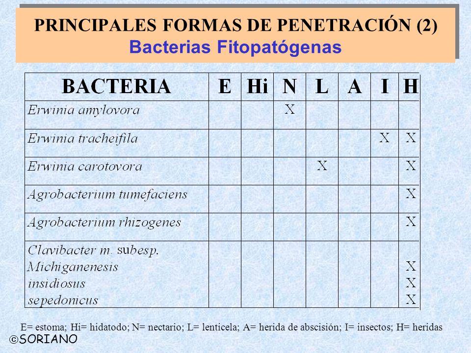 PRINCIPALES FORMAS DE PENETRACIÓN (2) Bacterias Fitopatógenas
