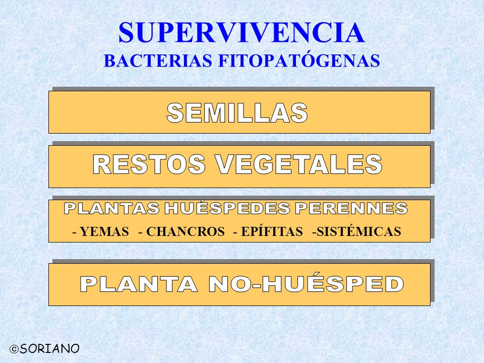 SUPERVIVENCIA BACTERIAS FITOPATÓGENAS