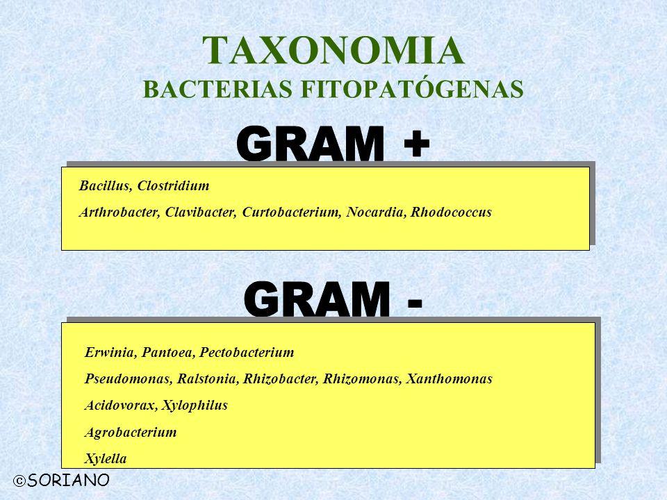 TAXONOMIA BACTERIAS FITOPATÓGENAS
