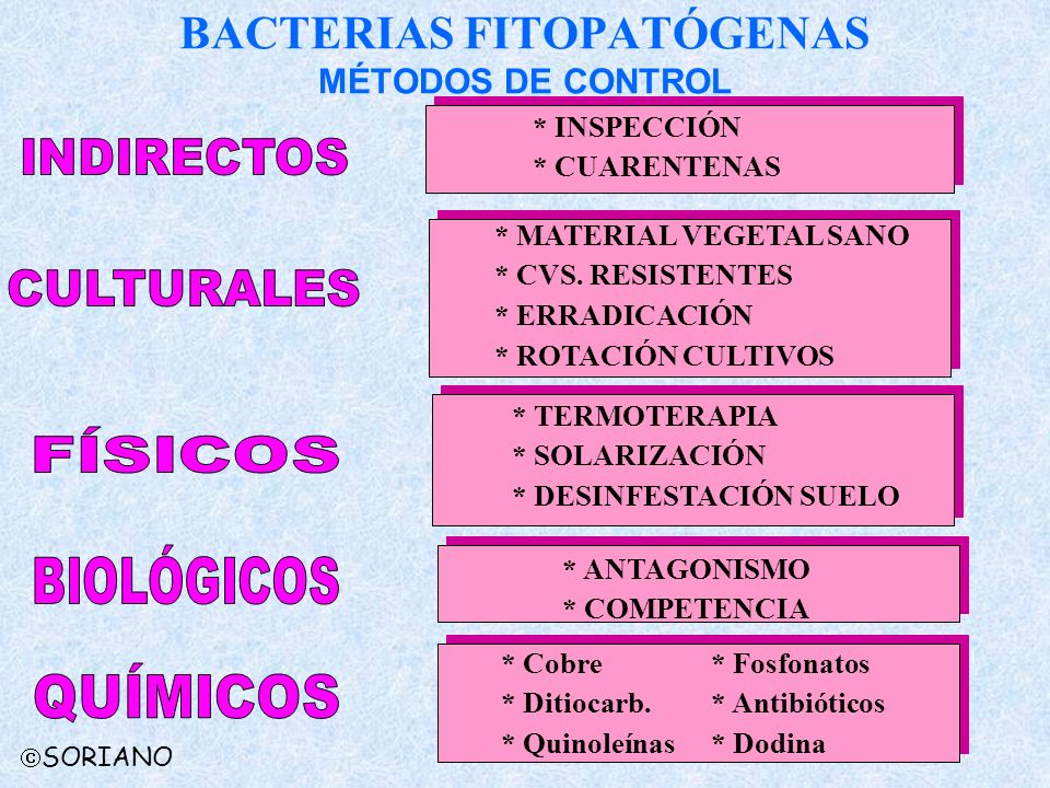 BACTERIAS FITOPATÓGENAS MÉTODOS DE CONTROL