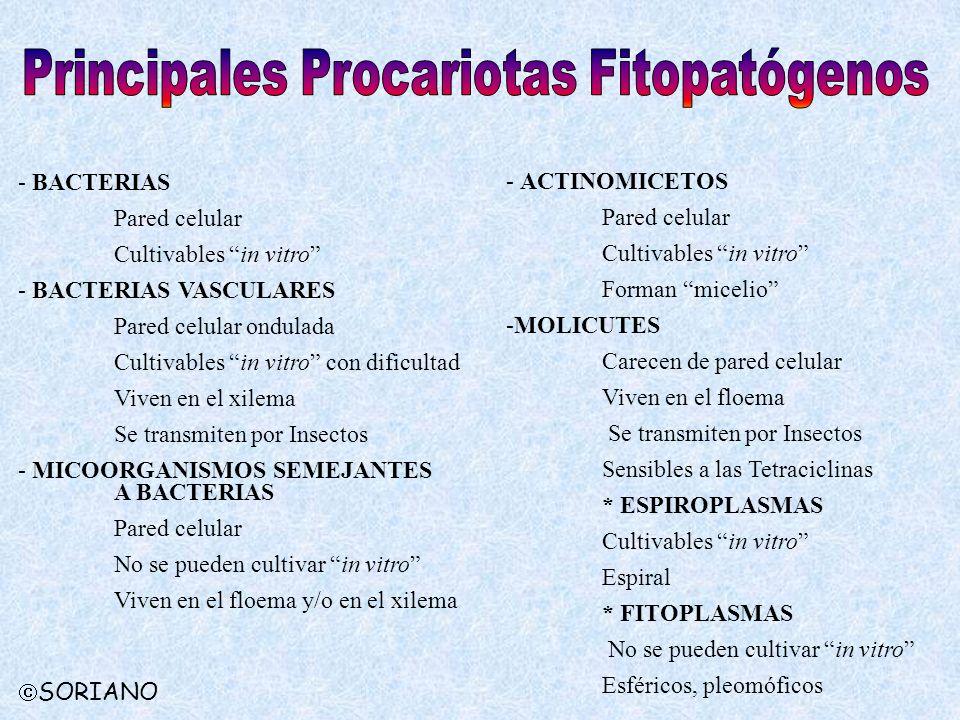Principales Procariotas Fitopatógenos
