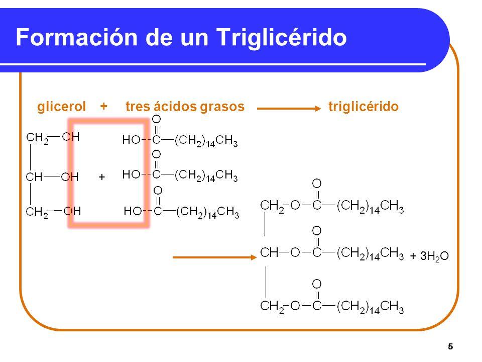 Formación de un Triglicérido
