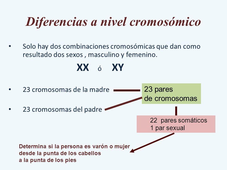 Diferencias a nivel cromosómico