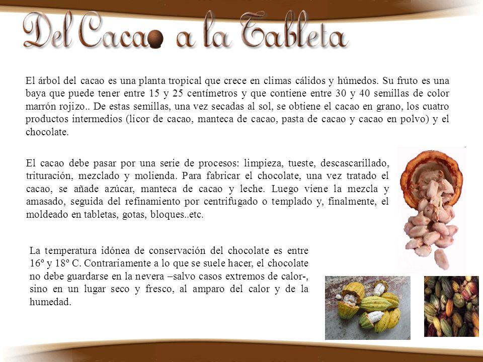 El árbol del cacao es una planta tropical que crece en climas cálidos y húmedos. Su fruto es una baya que puede tener entre 15 y 25 centímetros y que contiene entre 30 y 40 semillas de color marrón rojizo.. De estas semillas, una vez secadas al sol, se obtiene el cacao en grano, los cuatro productos intermedios (licor de cacao, manteca de cacao, pasta de cacao y cacao en polvo) y el chocolate.
