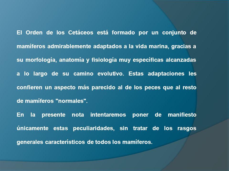 Dorable Anatomía De Mamíferos Y Fisiología Ppt Elaboración ...