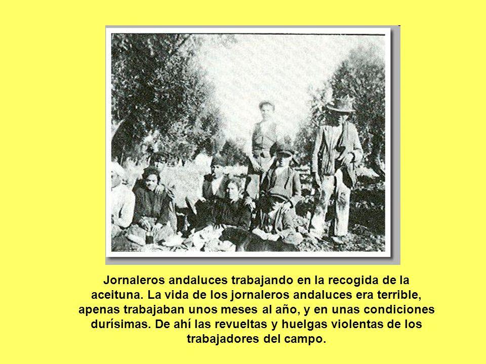 Jornaleros andaluces trabajando en la recogida de la aceituna