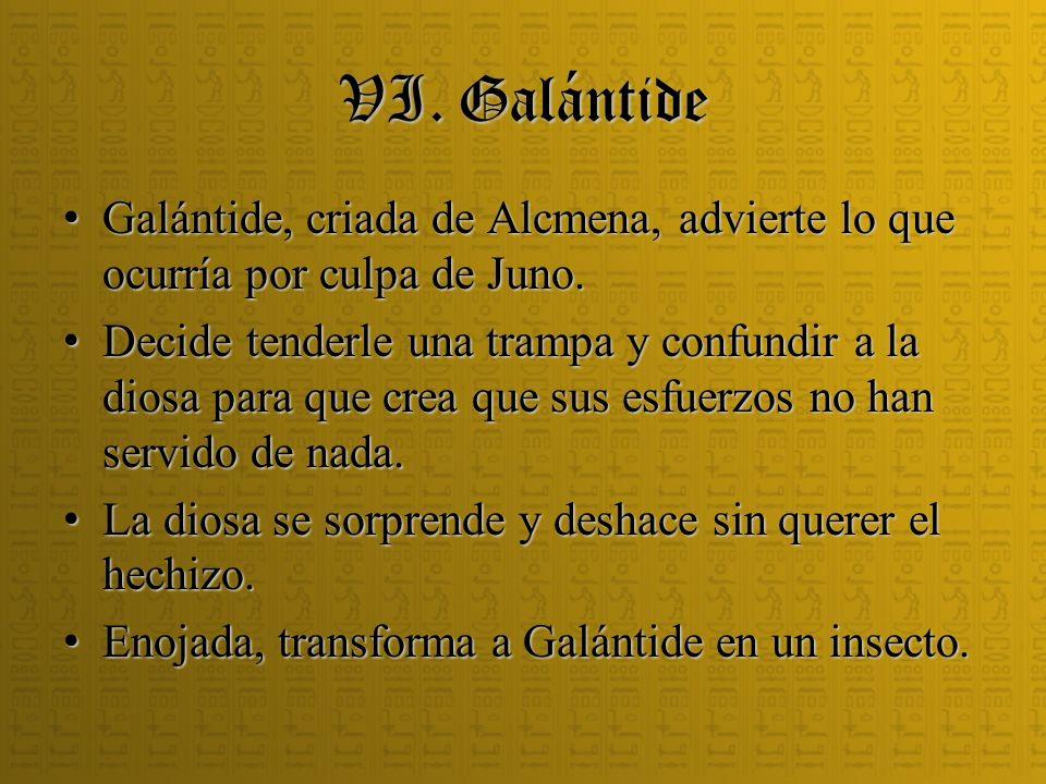 VI. Galántide Galántide, criada de Alcmena, advierte lo que ocurría por culpa de Juno.