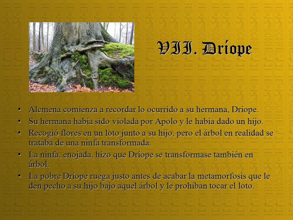 VII. Dríope Alcmena comienza a recordar lo ocurrido a su hermana, Dríope. Su hermana había sido violada por Apolo y le había dado un hijo.