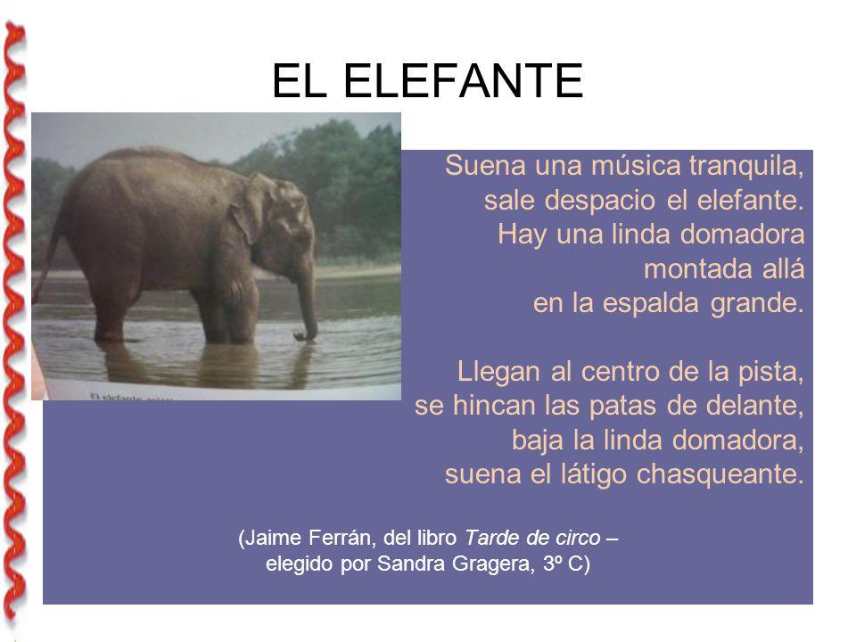 EL ELEFANTE Suena una música tranquila, sale despacio el elefante.