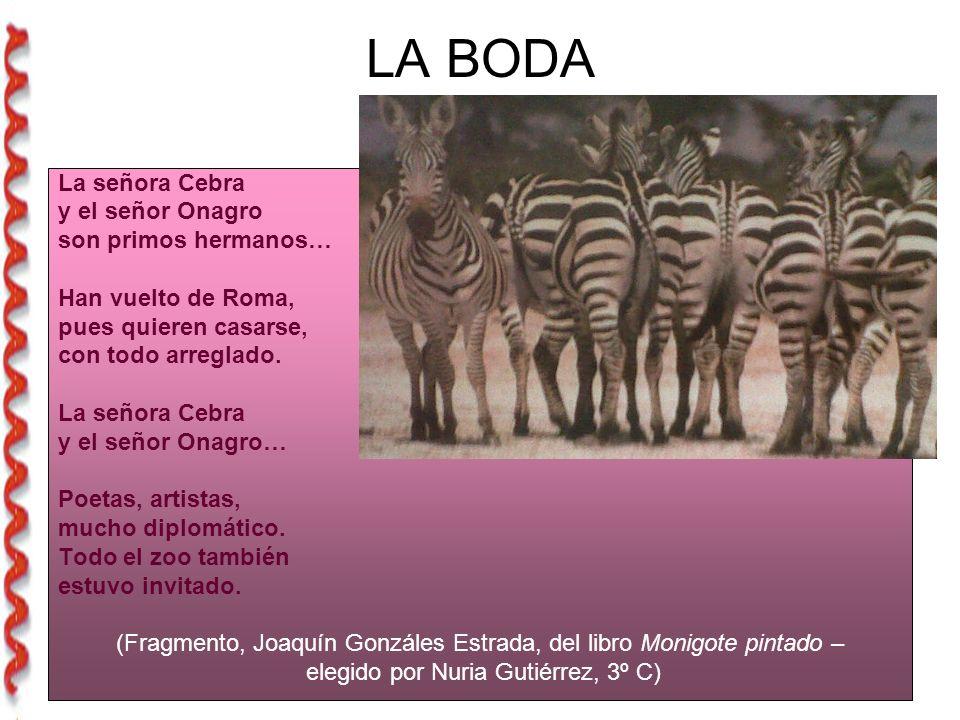 LA BODA La señora Cebra y el señor Onagro son primos hermanos…